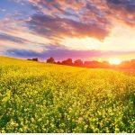 Tháng 1 Nên đi Du Lịch ở đâu Trong Nước đẹp Nhất?