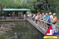 Trại Nuôi Cá Sấu