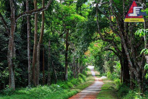 tour du lịch rừng cúc phương 2 ngày