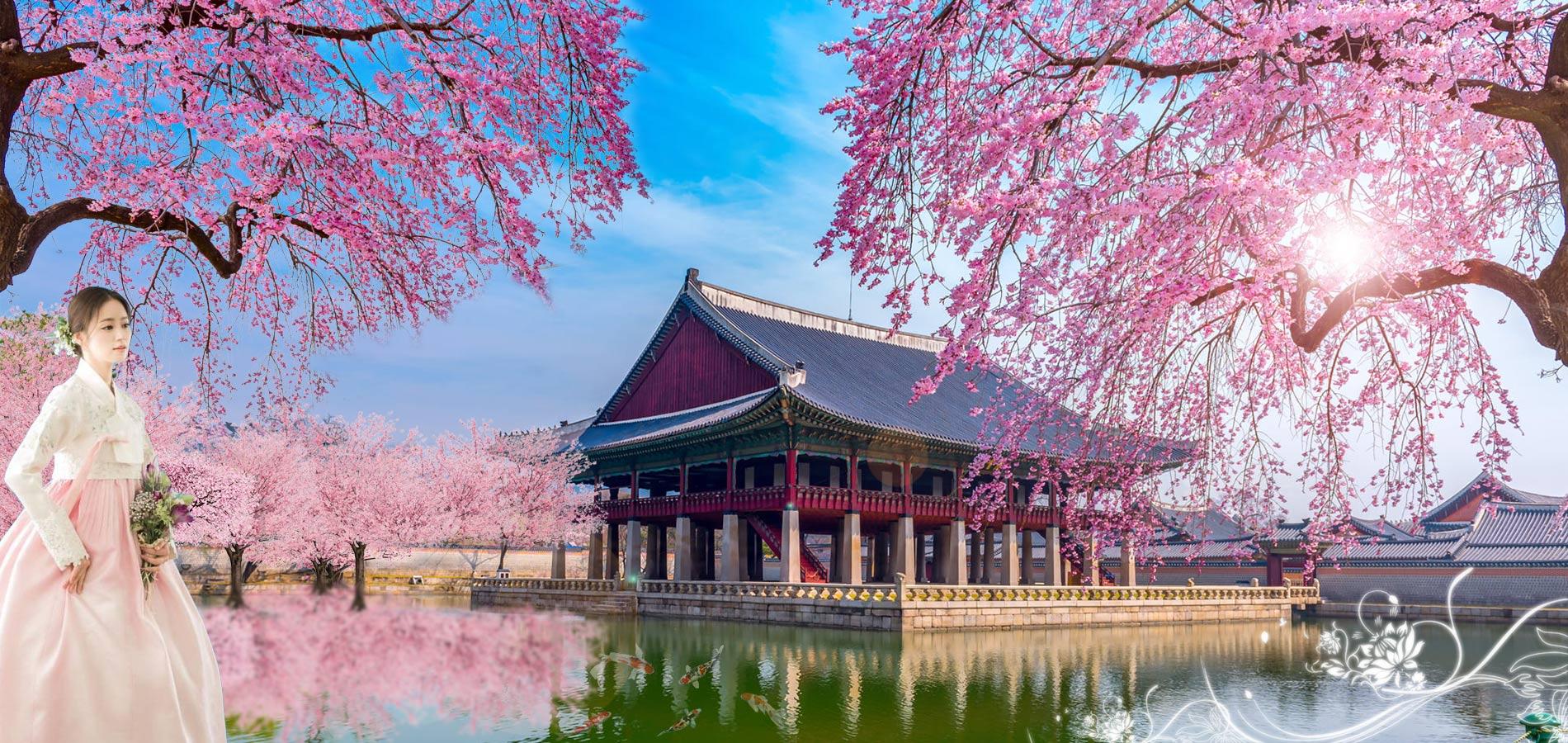 Tour Du Lịch Lạc Vao Xứ Sơ Hoa Anh Đào Cùng The Sinh Tour